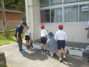 横川支部 緑のカーテンエコプロジェクト