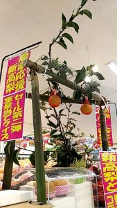 『新高梨重量当てクイズ』~旬の梨が10名に当たる!!~